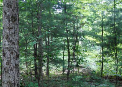 timberland-management
