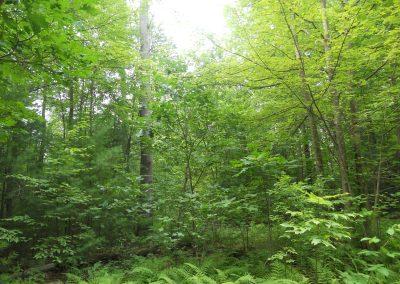Forest_Mangement